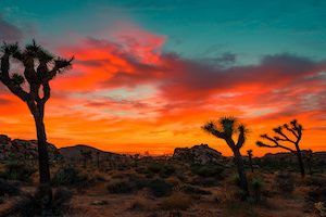 Colorful sunset in Joshua Tree National Park